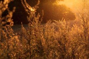 Voici venue la saison des pollens et des allergies